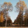 autumn in Jardin des Tuileries, Paris