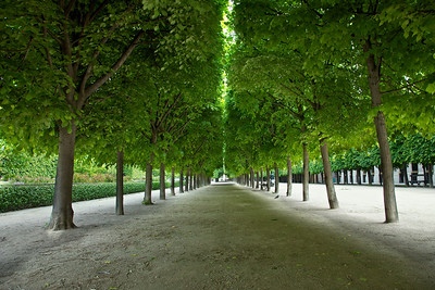 Palais Royale Tree Corridor.  This is a wonderful place to explore and was recently in the Mission Impossible movie.