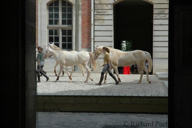 Horses in Versailles