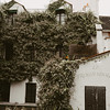 ivy covered homes in Montmartre