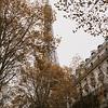 the eiffel tower  peeking through autumn leaves