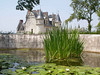 lilypad pond at Amboise