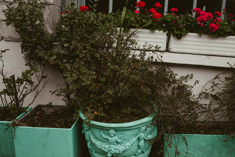 green pots with plants