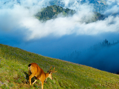 Deer on the Mountainside Copyright 2009 Neil Stahl