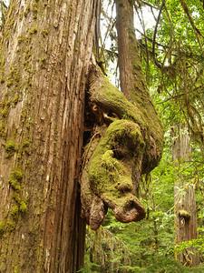 Wild Hog Tree Copyright 2009 Neil Stahl
