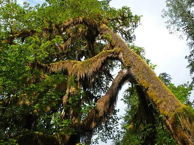 Big Ol Mossy Tree Copyright 2009 Neil Stahl