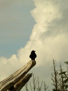 Inspecting Raven Copyright 2009 Neil Stahl