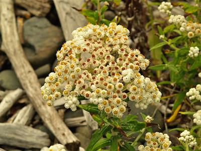 Interesting Flowers Copyright 2009 Neil Stahl