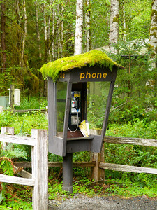 Hoh River Phone Booth Copyright 2009 Neil Stahl