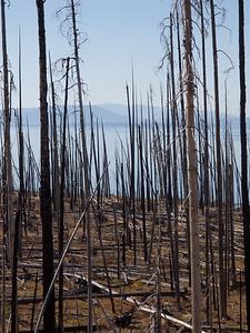 Yellowstone Lake through  burnt trees  Copyright 2011 Neil Stahl