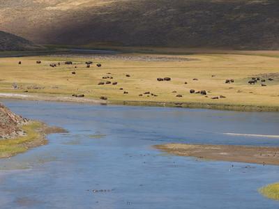 Cloud, bison, river  Copyright 2011 Neil Stahl