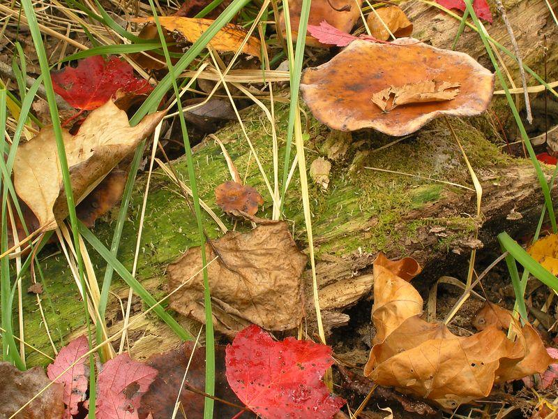Rock Creek Park, Rockville Maryland - October 2004