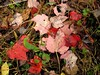 Red Leaves, Rock Creek Park, Rockville Maryland - October 2004