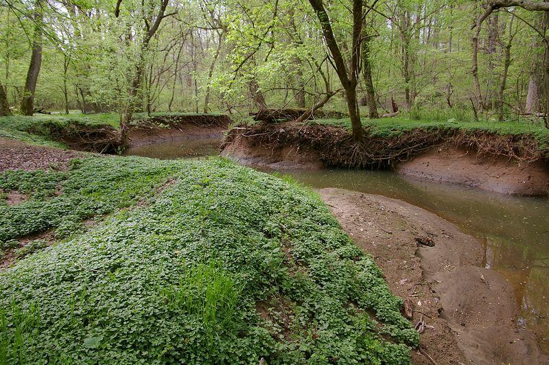 Rock Creek Park, Rockville Maryland - April 2005