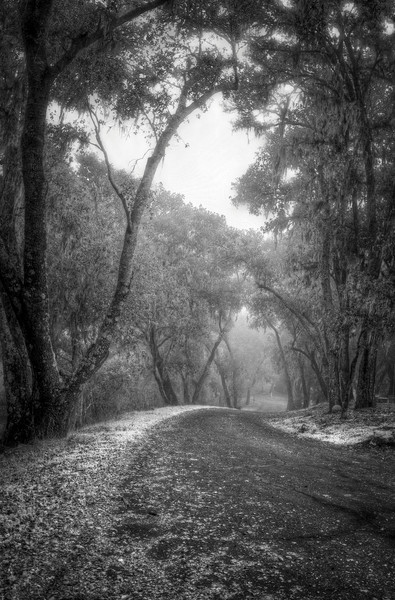 Looking down the road leading to our Hacienda in Paso Robles on a foggy morning. I really liked this Infrared black & white version of the photo.