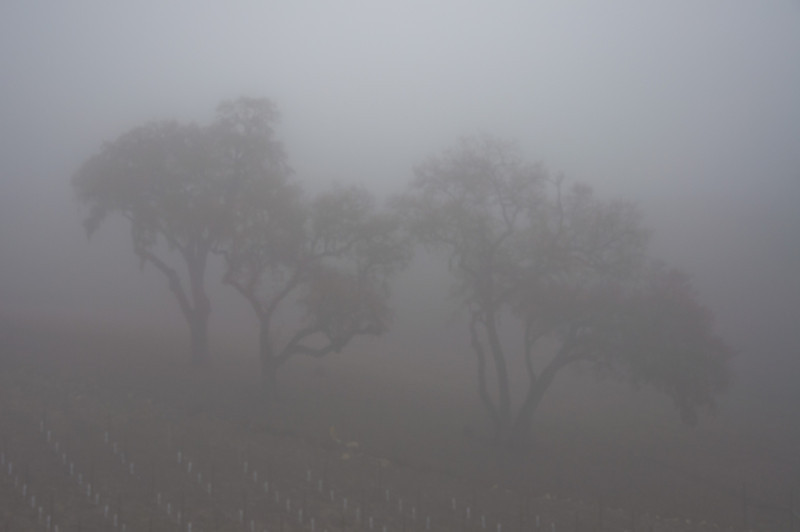 It was a really foggy morning the first day we spent in Paso Robles. This picture is looking out into the woods from our Hacienda.