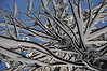 Zebra tree