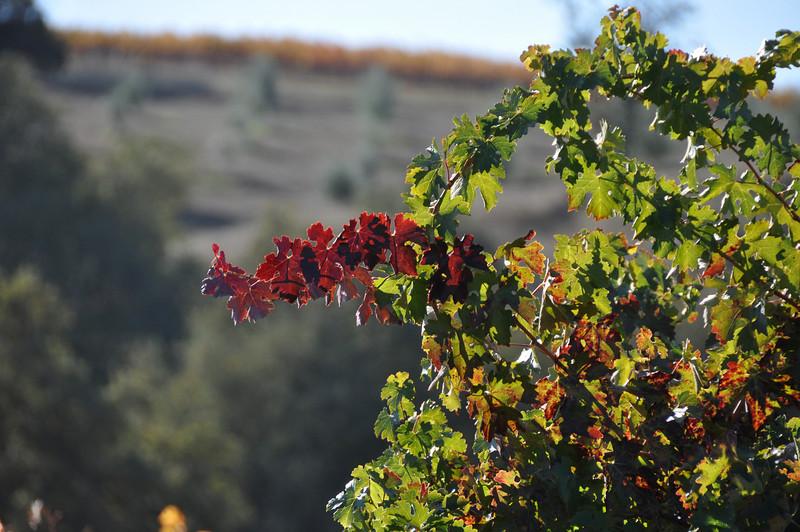 Autumn in Paso Robles