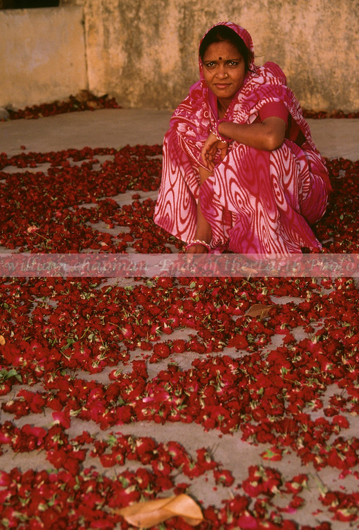 Woman drying flowers on rooftop.  They will be used for making garlands.