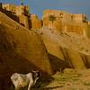 Jaisalmer Fort (1356).