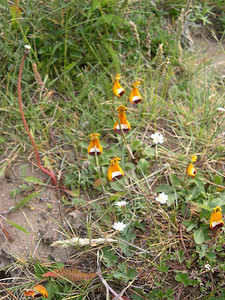 Intersting wildflowers