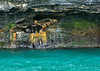 39. We stop to observe a colony of sea lions---a cozy living arrangement.
