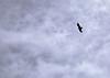 47. El condor passes overhead.
