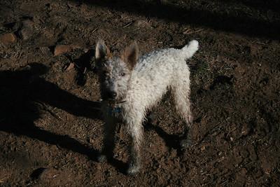 mud weasel