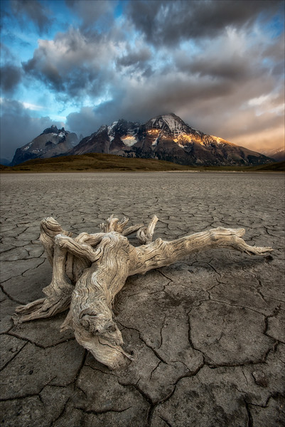 Driftwood on a dry lake bed.
