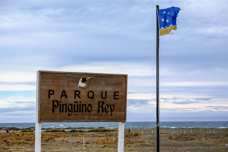 King Penguin colony on Tierra del Fuego