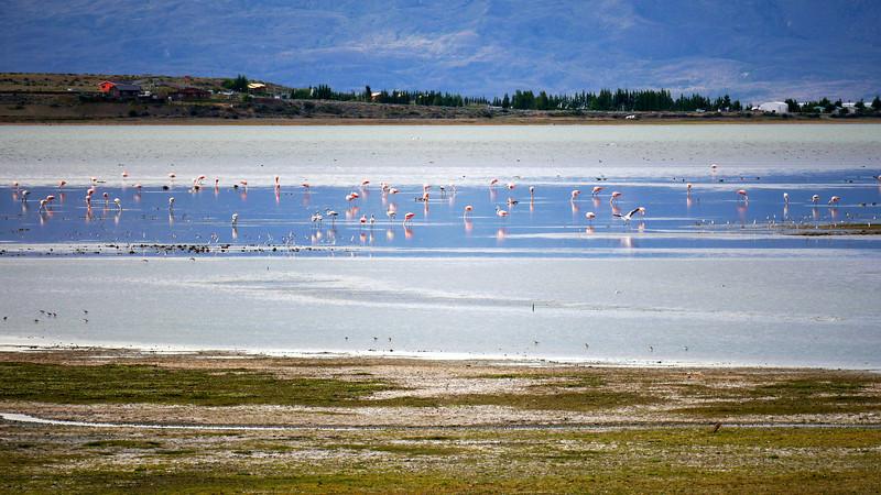 OAT Patagonia trip, Dec 2013.<br /> Flamingos near El Calafate, Argentina