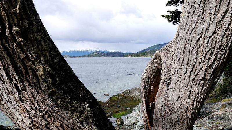 OAT Patagonia trip, Dec 2013.<br /> Ushuaia, Terra del Fuego National Park. Ensenada Bay.
