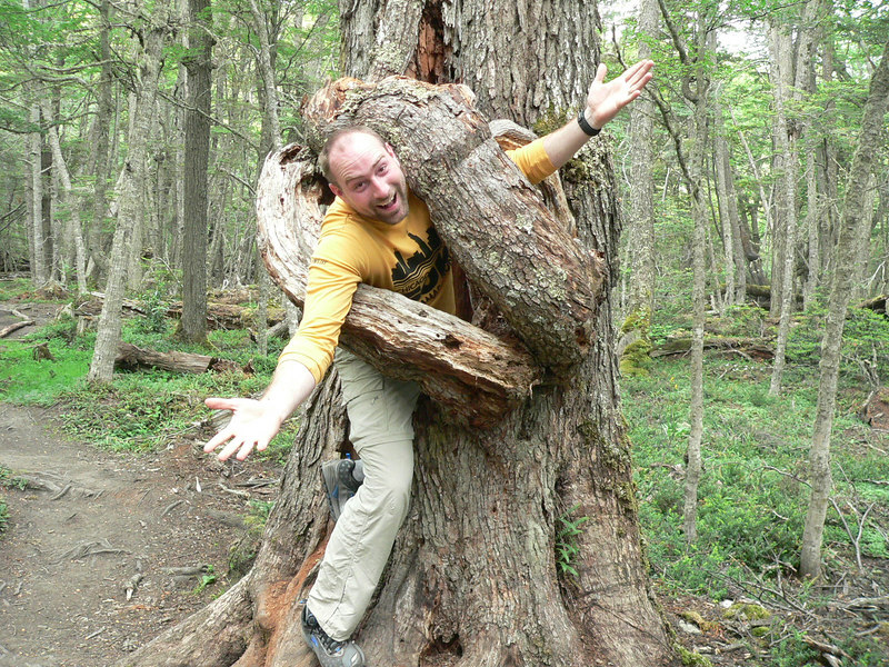 Help! I got caught by a tree!