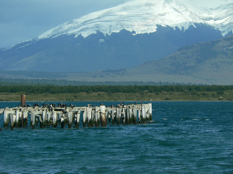 Cormorants in the Pacific Ocean in the town of Puerto Natales.