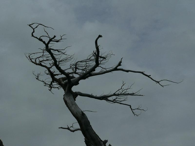 Jay takes the coolest creepy tree photos