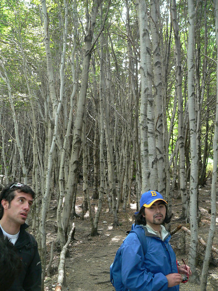 Hugo and Roberto battle for guide supremacy in a Lenga forest. Hugo won the goofy expression contest.