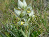Orchid that Jay captured in a gale-force wind while Corey and the driver were changing a flat tire.