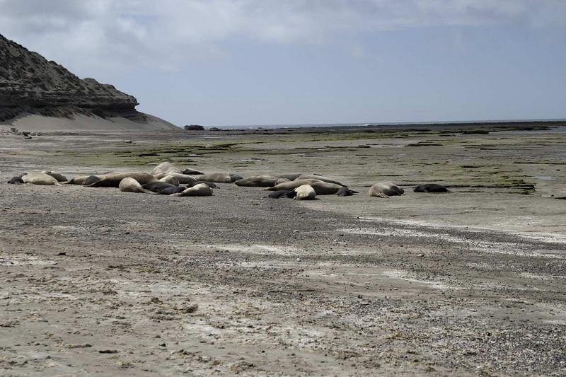 Patagonia Valdes 48