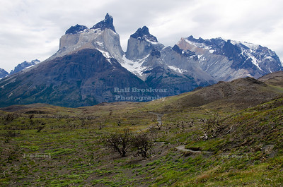 Devastation: A wildfire that was caused by a careless tourist destroyed all trees in a wide area near the Cuernos del Paine (Horns of Paine) in Torres Del Paine National Park, Patagonia, Chile