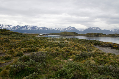 On a small island in the Beagle Channel near Ushuaia, the southernmost city in the world. The snow-capped Patagonian Andes form the background.