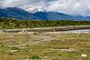 Martillo Island, Southern Patagonia, Argentina
