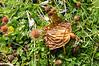 Mushroom in Patagonia