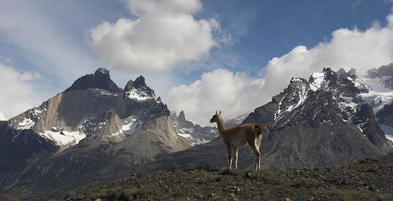 A gauanaco looking at Cuernos del Paine (left) and Cerro Paine Grande (right)