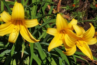 Edith's Flowers
