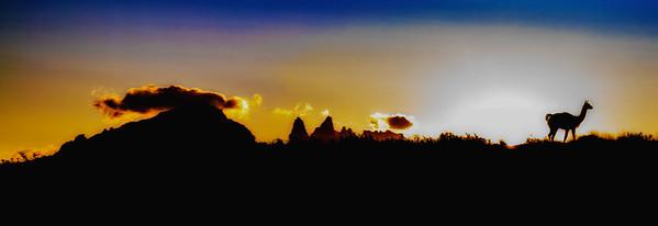 Guanaco Silhouette