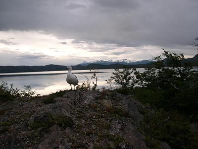 Similar bird with goose watching