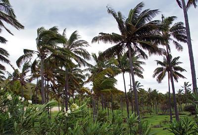 Palm Grove at Anakena Beach