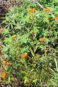 Flourishing Weeds