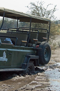 Oops!  Okavango Delta, Botswana, Africa.