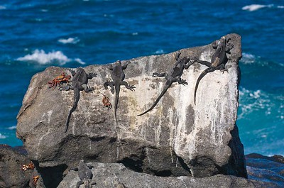 Sunbathers in the Galapagos Islands, Ecuador.
